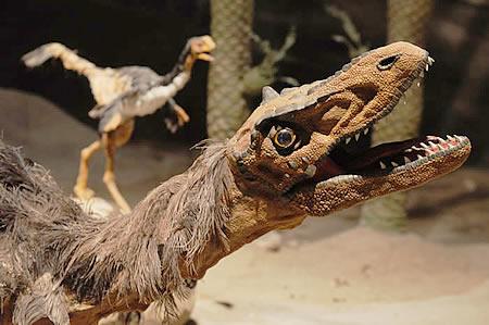 Paleontological Museum Egidio Feruglio - MEF
