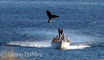 Walbeobachtungen Halbinsel Valdés