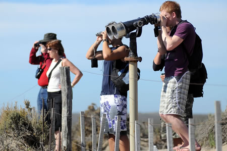 tourists in Punta Norte... waiting the orcas attack