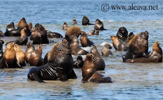 Foto de  Sea Lions Colony - Punta Piramide