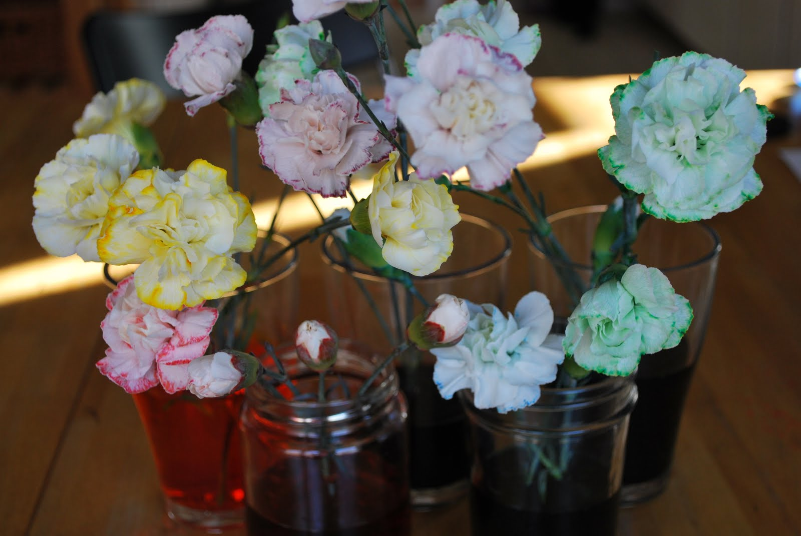 Greenish Thumb Science Expo Project Coloring Carnations
