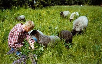 Bland fåren skall du räknas