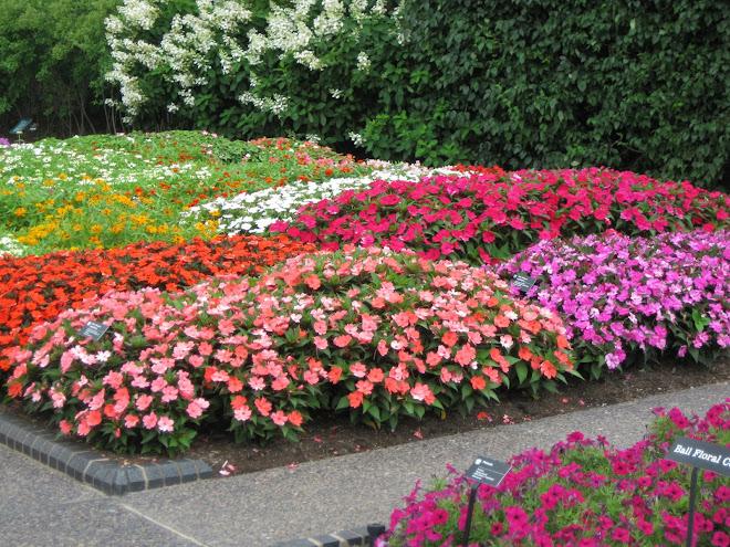 Diversity in bloom is beautiful!