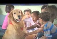 Joe é o cão terapeuta da raça Golden Retriever que alegra as crianças com câncer