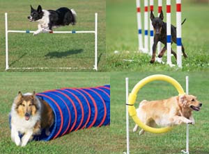 dogs puppies agility training