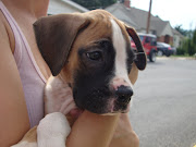 . one of the mothers brought one of her boxer puppies in.