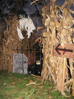 we use 100s of dried corn stalks from the local farmers to form a scary pathway that takes trick or treaters from one haunt zone to the next which in turn - Halloween Corn Stalks