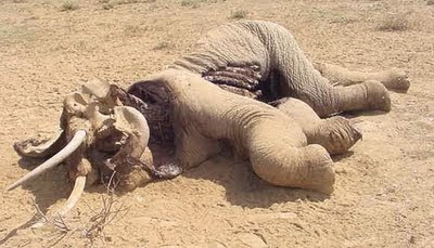 dead+elephant.jpg