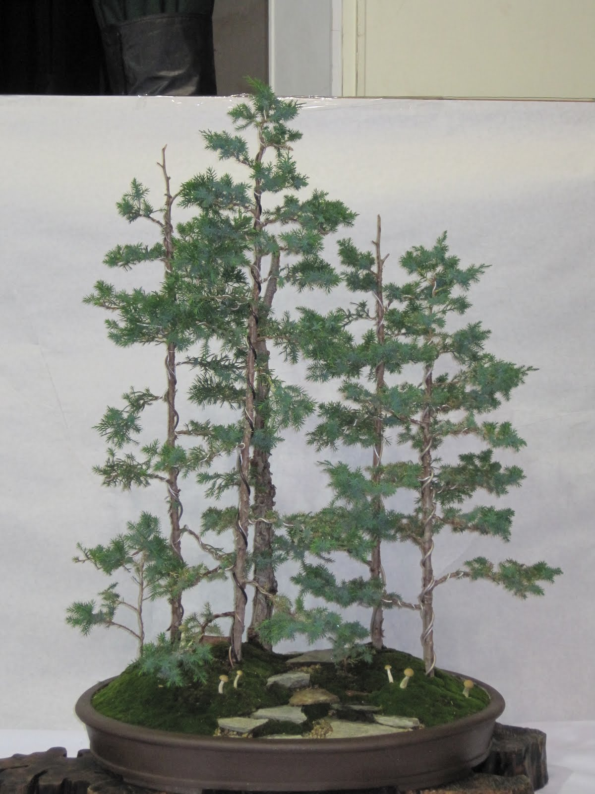 ShoChiku Bai Bonsai Club UPDATED BONSAI TREES FOR SALE As Of 05