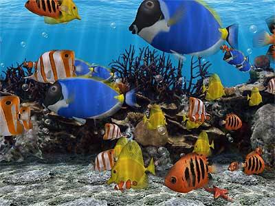 Salt Water Fish on 8402  D Fish Sc Jpg