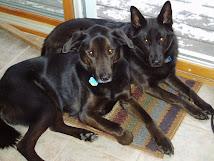 Loki & Gunnar