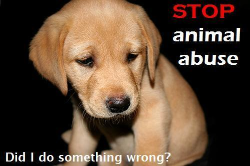 Animal Abuse Quotes widescreen wallpaper