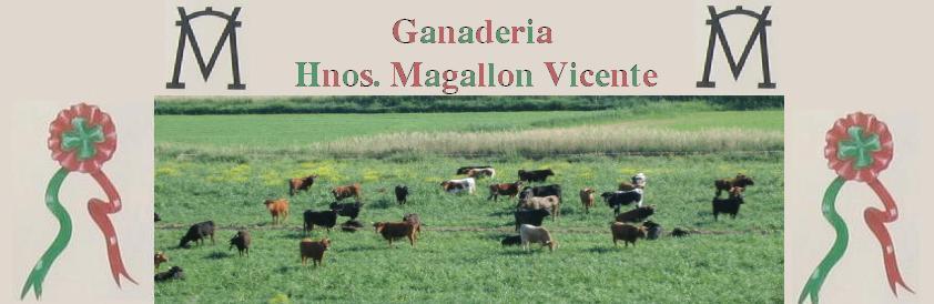 Ganaderia Hnos. Magallón Vicente