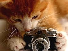 Eu Fotografo