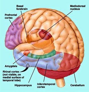 http://4.bp.blogspot.com/_k9Xk0WEWy9g/TAF4MiXeNdI/AAAAAAAAAZs/R7qasWCL9c0/s1600/otak+tengah.jpg