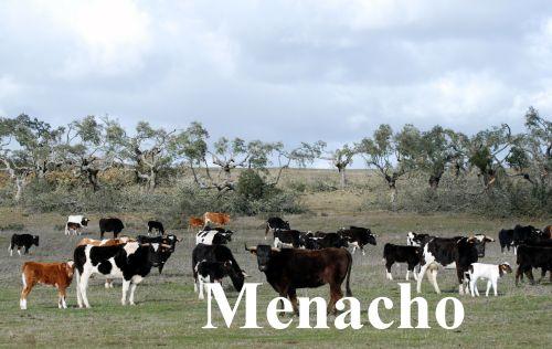 Nueva Tragedia Brava En El Campo Charro La Ganader A De Sanchez