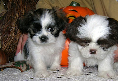 Baby Trixie & Baby Gus