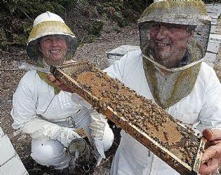 collecting honey