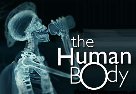 the human body is an