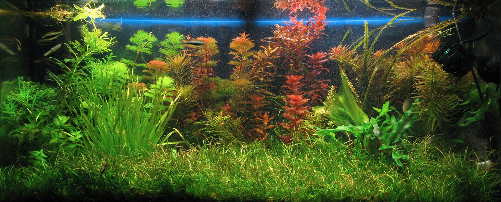 Piante Per Acquario Tropicale : Acquario foto maggio