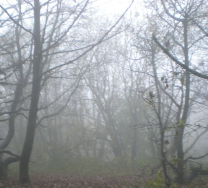 trees in the mist, Derbyshire