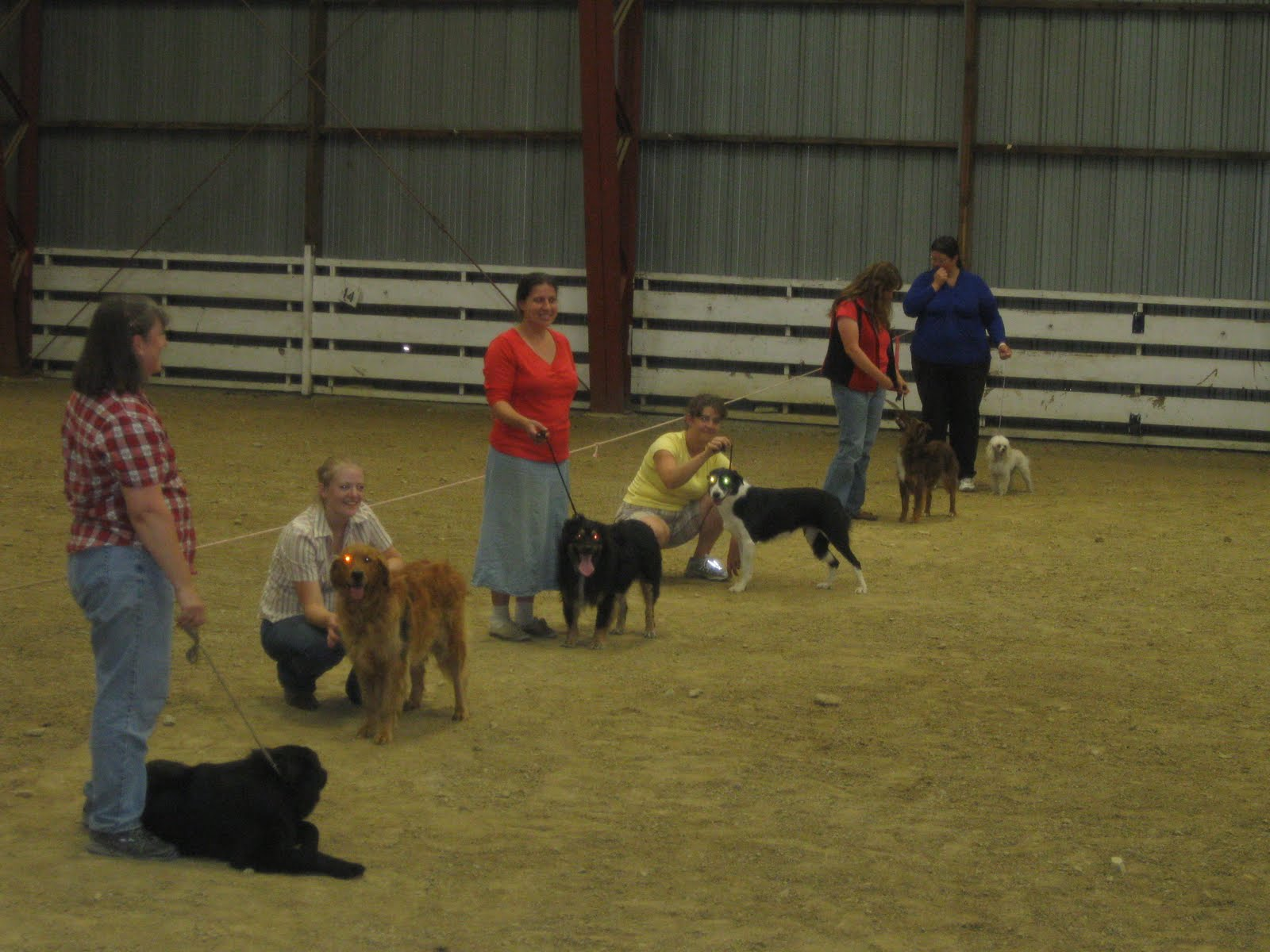 4H Clover Country: 2010 4-H Dog Show
