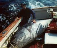 tuna is much prized as a great gamefish