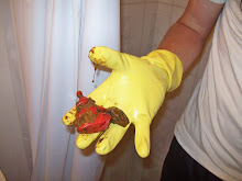 My toilet was clogged with this!