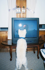 Our Westhighland terrier loves TV