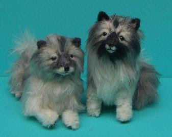 Keeshond Dog Breeds Images