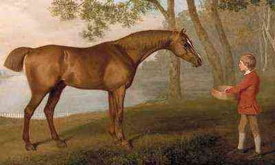 George Stubbs - Pumpkin with a Stable-Lad (1774) detail