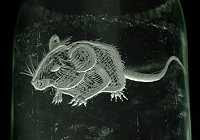 Charlotte Hughes-Martin - Engraved Milk Bottle Mouse (2008)