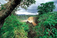 http://4.bp.blogspot.com/_kJmU9ux_X0A/S4JvV0motZI/AAAAAAAABz4/3zHzHDaNyXk/S220/Selva+africana.jpg