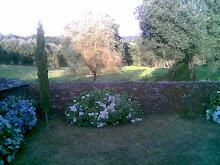 Hortensias y muralla desde la habitación de la reja