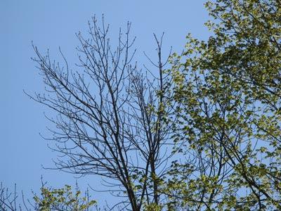 spring buds, leaves, sky MCU
