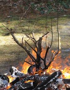 fire branch 6