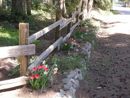 vintage split rail fence