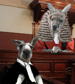 Kangaroo Court in America