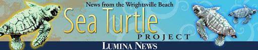 Turtle News