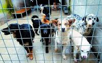 Brindisi: incentivi per le adozioni dal canile