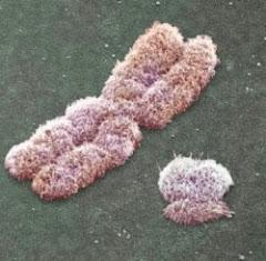 un cromosoma 'X' al lado de un