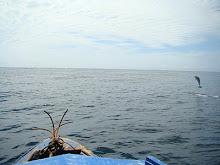 Delfin bei unserer Bootstour