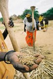 Severe droughts in Mali