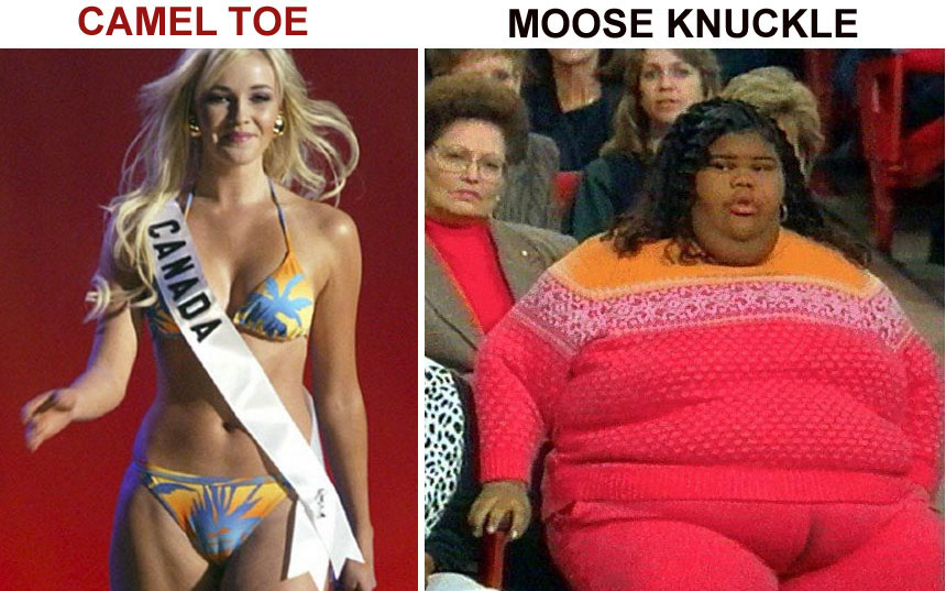 This is a the difference between a camel toe and a moose knuckle: