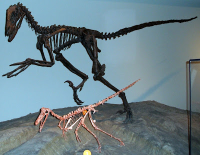 Arctic and Antarctic dinosaurs