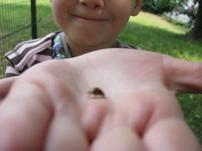 Manuela, die Insektenforscherin
