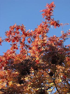 Kupfergolden leuchten die Blätter