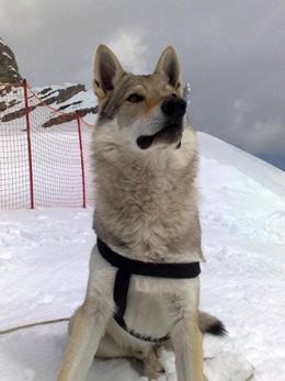 Il nostro lupo