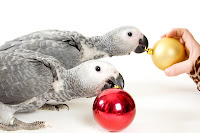 shutterstock 7787842 Parrot Care Tips for the Holidays