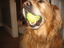 my baby girl Zoe and her ball thats always in her mouth